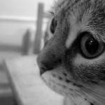 Мій кіт за тобою скучив